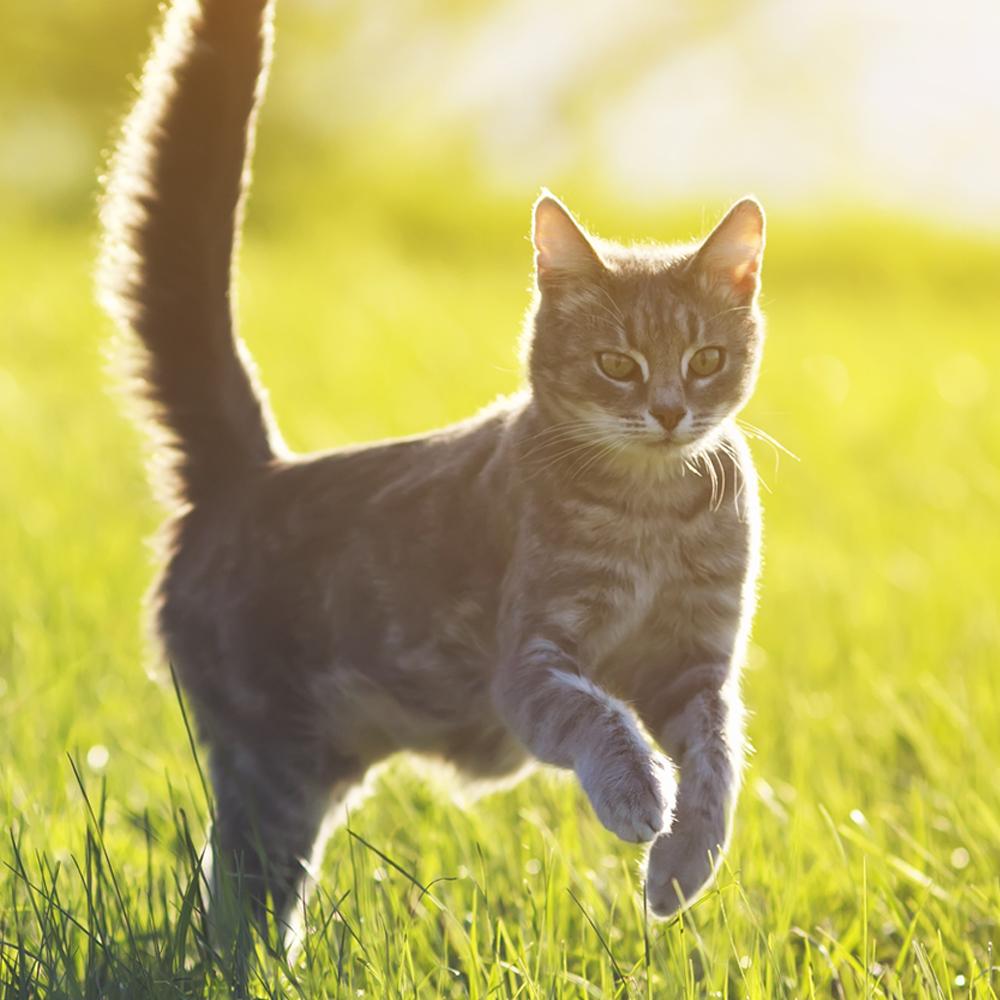Sklep dla kota