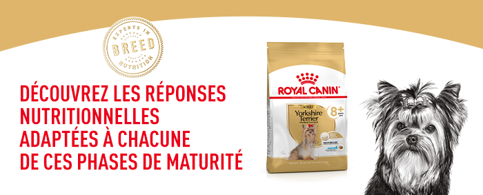 Royal Canin Yorkshire Terrier Ageing