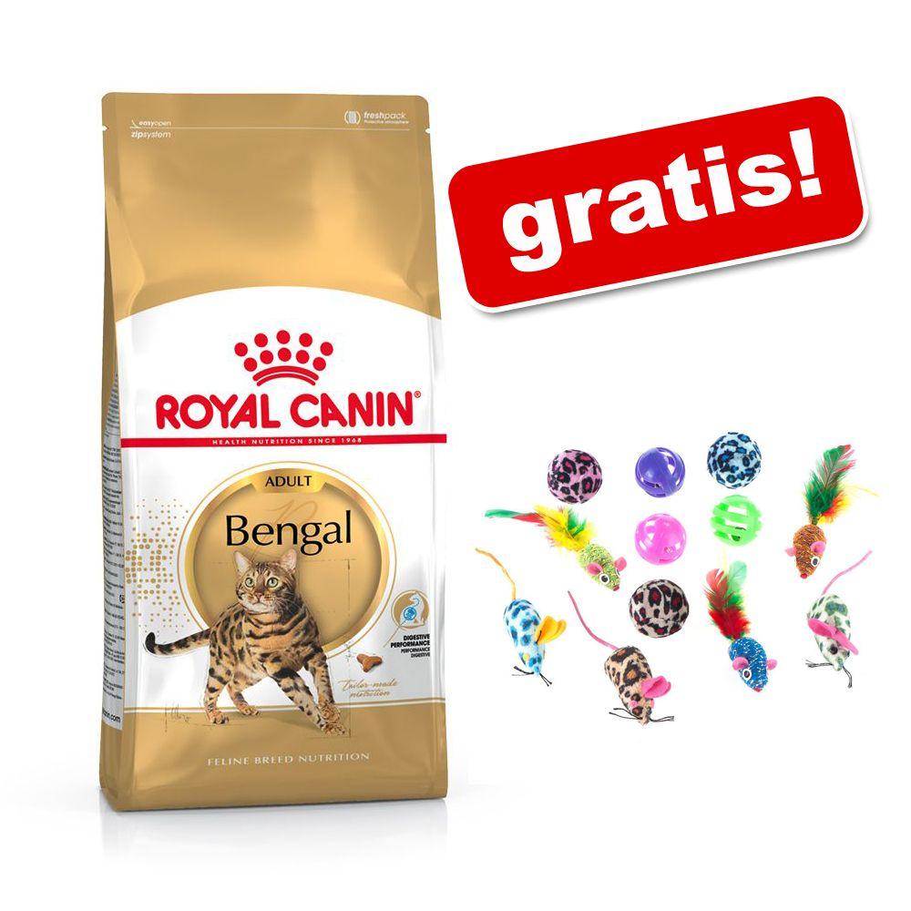 10 kg Royal Canin + kattleksaker på köpet! - Outdoor +7