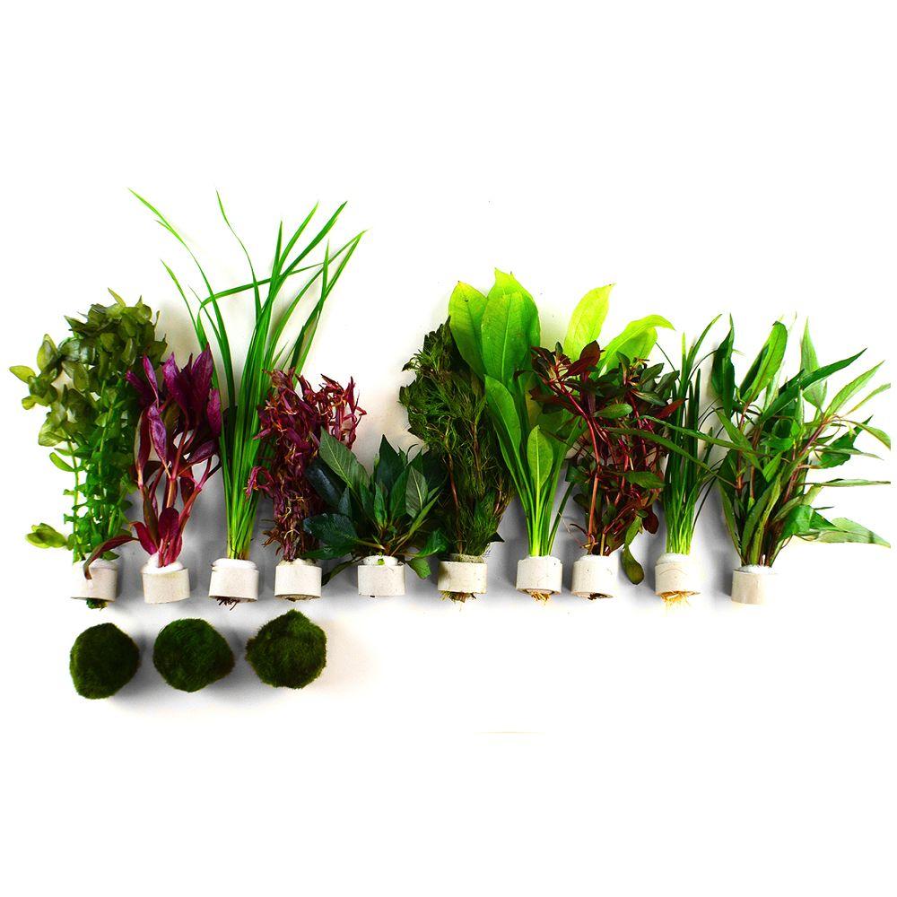 """Image of Set piante per acquario Zooplants """"Macchia Rossa"""" - 13 piante"""