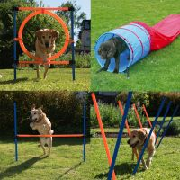 Set completo per agility dog fun & sport - - 4 elementi - prezzo top!.