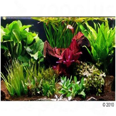 aquariumplanten-groene-theater-xxl-33-planten-incl-3-xl-moederplanten