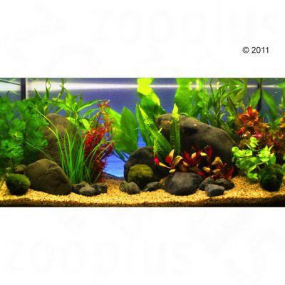 aquariumplanten-zooplants-rood-accent-13-planten