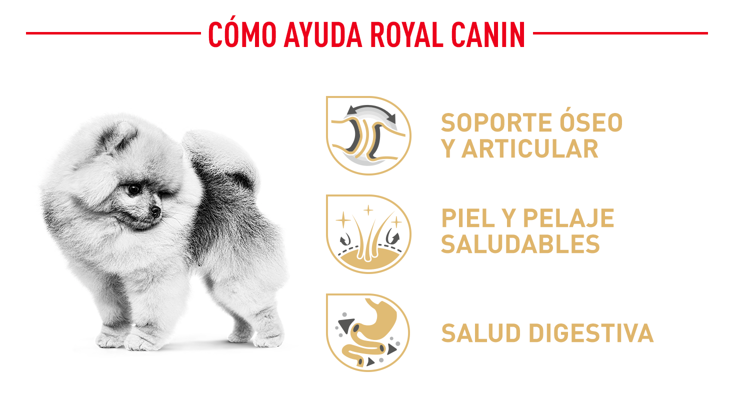 Beneficios de Royal Canin Pomerania
