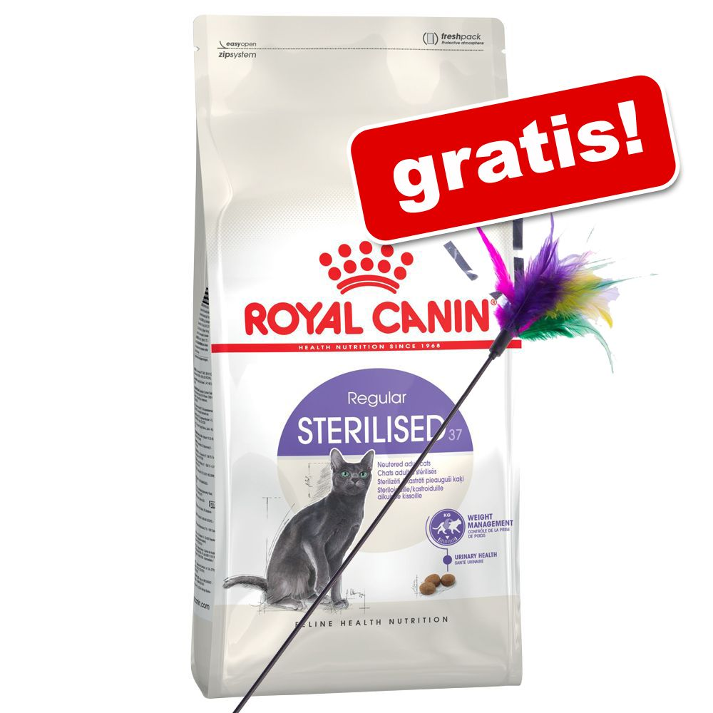 10 kg Royal Canin + fjädervippa på köpet! - Norwegian Forest Cat
