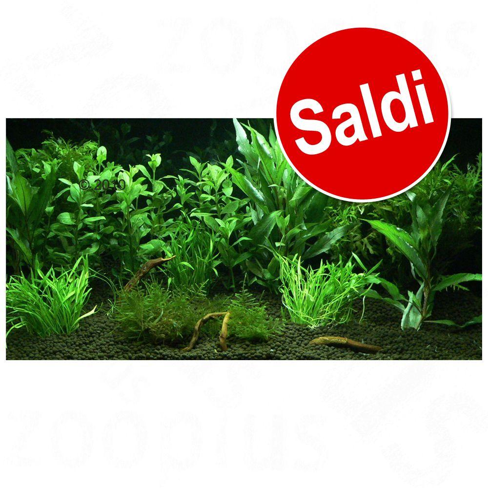 """Image of Set di piante per acquario Zooplants """"Giardino Eden"""" - 12 piante"""