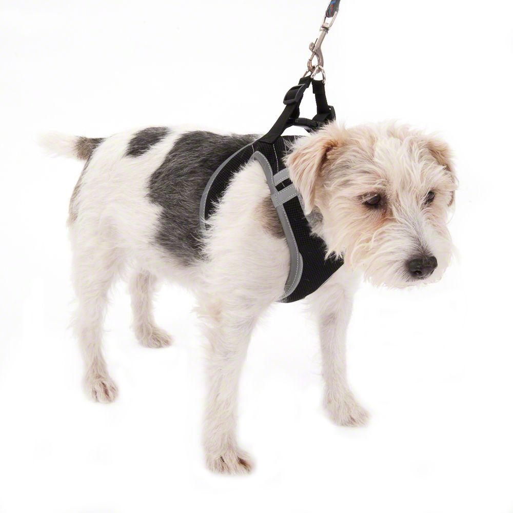 Feel Free szelki dla psa - M