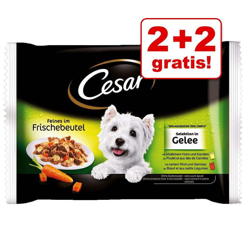 Image of 2 + 2 gratis! 4 x 100 g Cesar Le Delizie del Giorno - Selezione in salsa