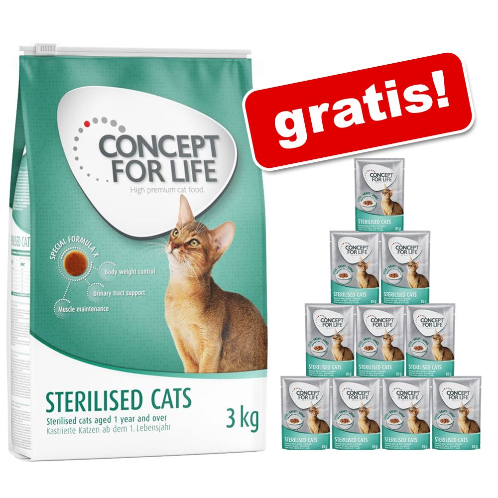 3 kg Concept for Life + Concept for Life w sosie, 12 x 85 g gratis! - Maine Coon Adult
