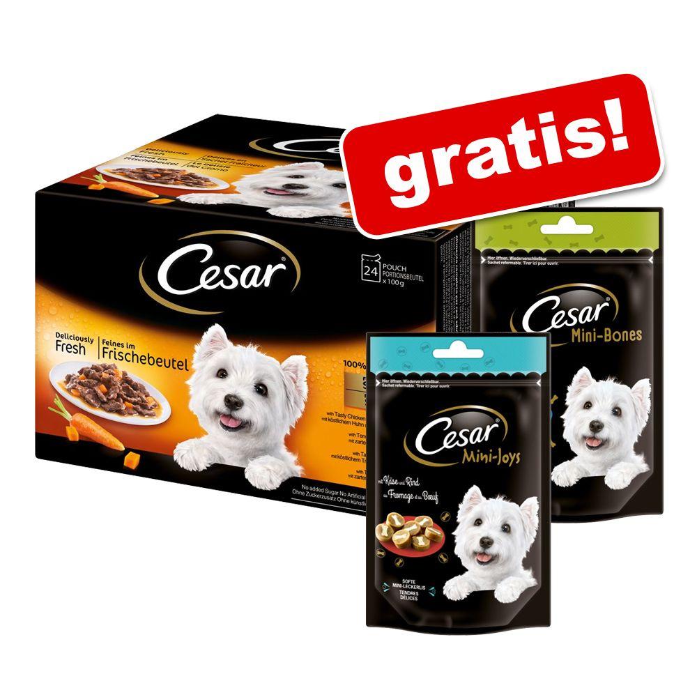 48 x 100 g Cesar Favoriten in Sauce + 2 x Cesar...