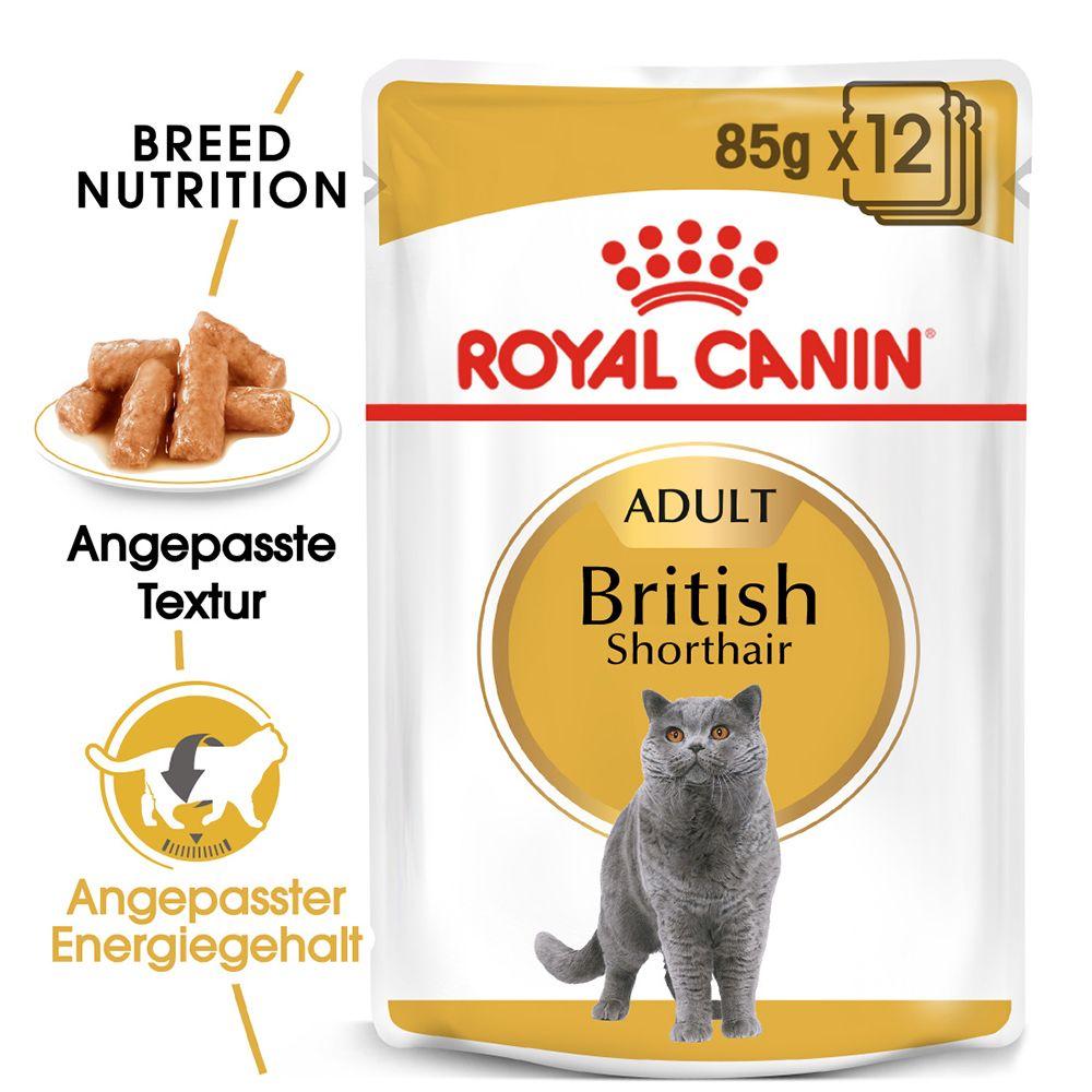 Royal Canin Breed British Shorthair Adult in Soße - 12 x 85 g