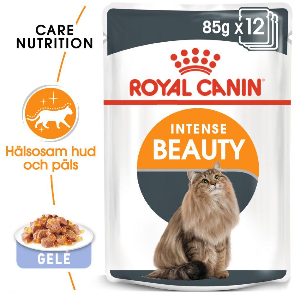 Royal Canin Intense Beauty i gelé - 48 x 85 g