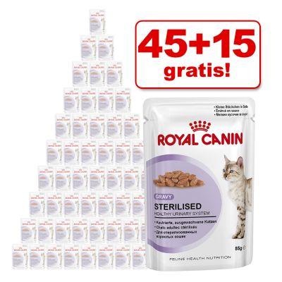 45 + 15 på köpet! 60 x 85 g Royal Canin kattvåtfoder – Kitten Instinctive i gelé