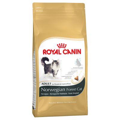 Royal Canin Norwegian Forest Cat – 10 kg