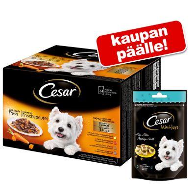 Cesar Deliciously Fresh Favorites in Sauce 72 x 100g + Cesar Mini Snacks 200g kaupan päälle! – 72 x 100 g + herkut: juusto & nauta