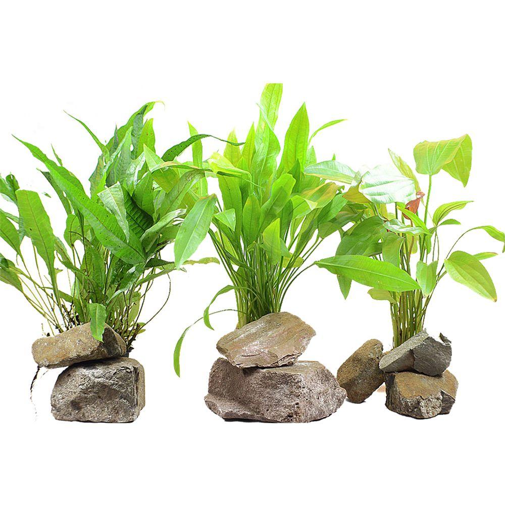 Image of Set di piante XL Zooplants per sfondo acquario - 3 piante in vaso