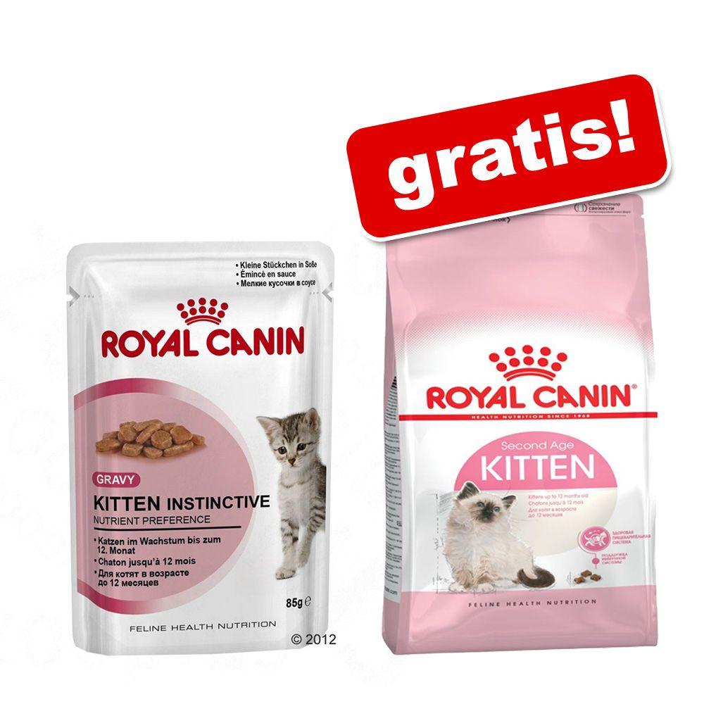 36 x 85 g Royal Canin Kit