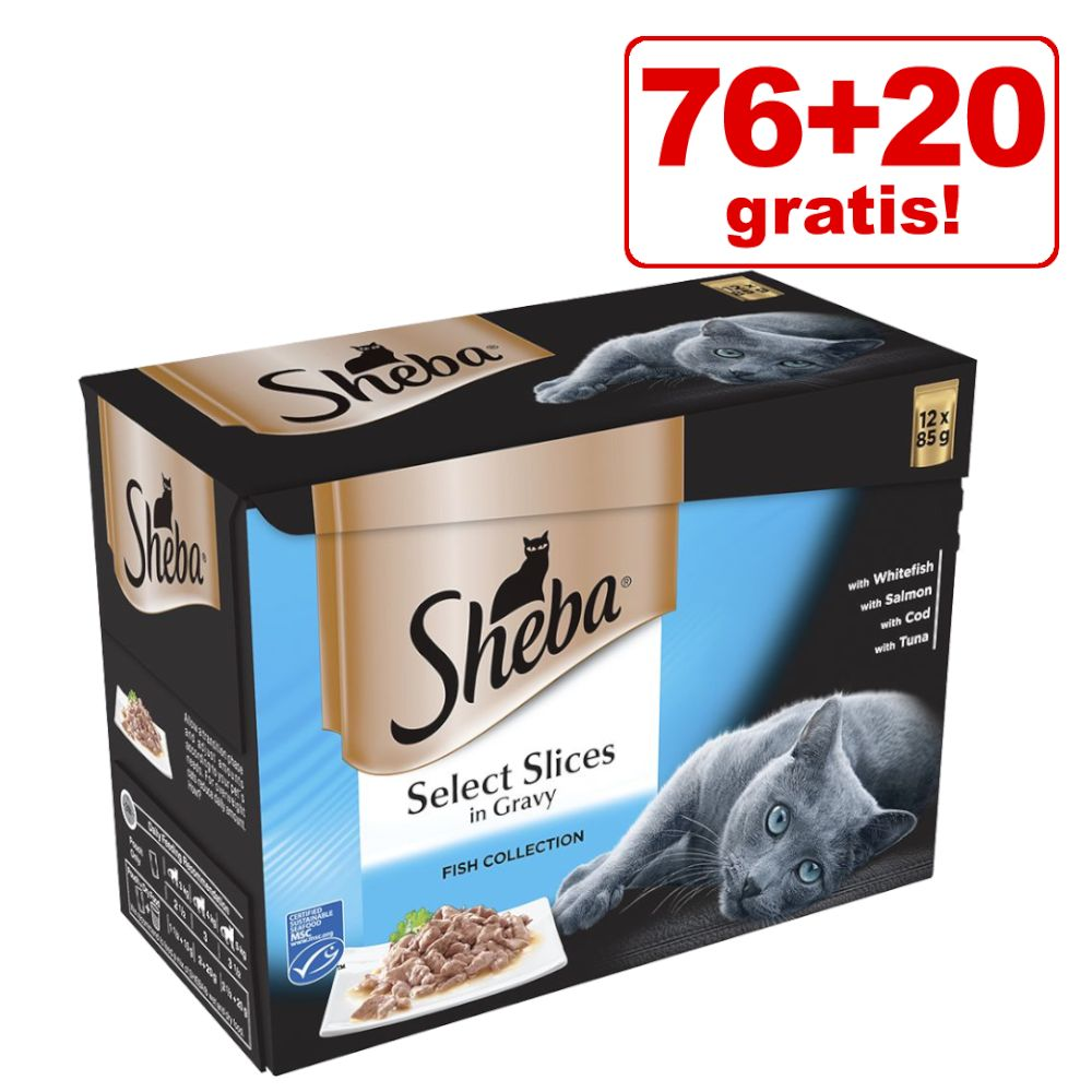 76 + 20 på köpet! 96 x 85 g Sheba kattmat - Multipack: Fish in Jelly