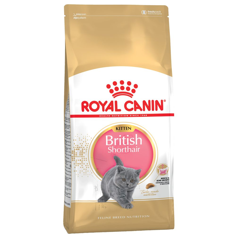British Shorthair Kitten Royal Canin Dry Cat Food