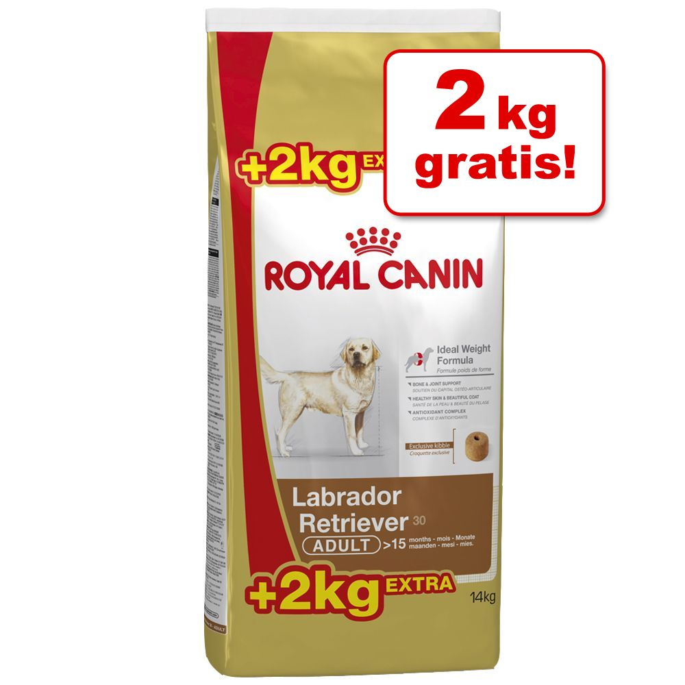 Foto 12 kg + 2 kg gratis! 14 kg Bonusbag Royal Canin Breed - Labrador Retriever Adult
