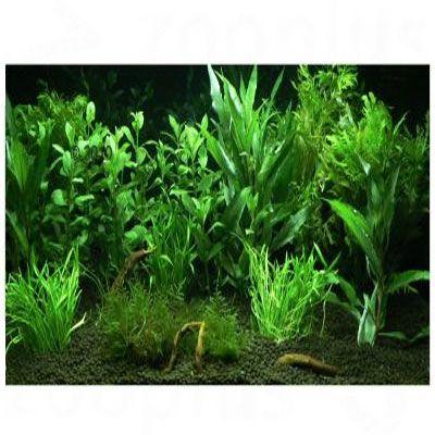 Hof van Eden - 12 planten