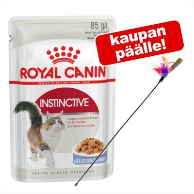 Royal Canin kissanruoka 24 x 85 g + höyhenkeppi kaupan päälle! - Kitten Instinctive in Gravy