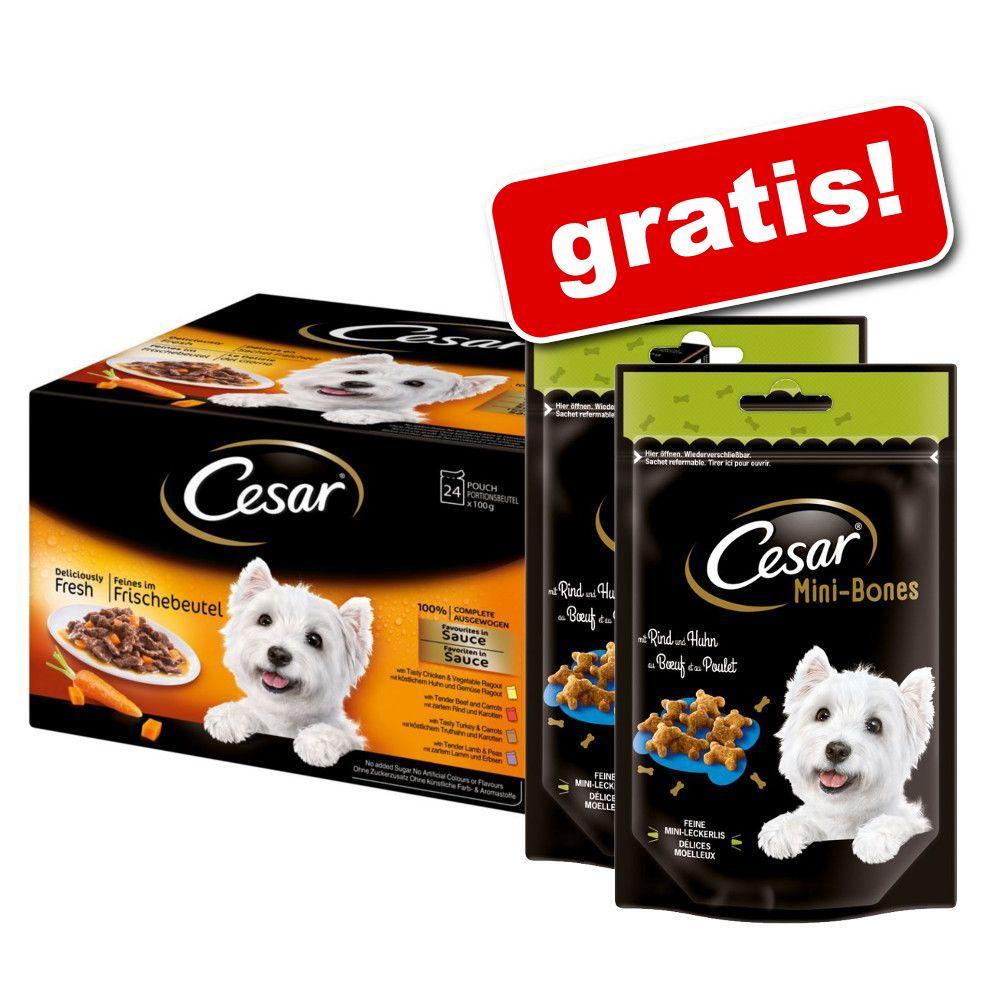 Image of 48 x 100 g Cesar Le Delizie del Giorno in salsa + 2 Mini Snack gratis! - 48 x 100 g + 2 x 100 g Mini joys con Formaggio e Pollo