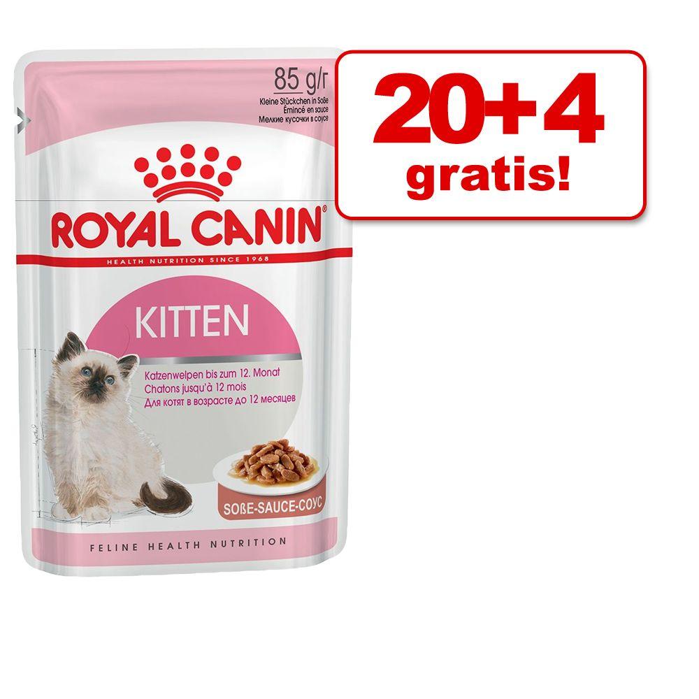 20 + 4 gratis! Royal Cani