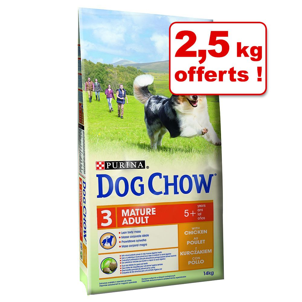 Chien Croquettes Dog Chow