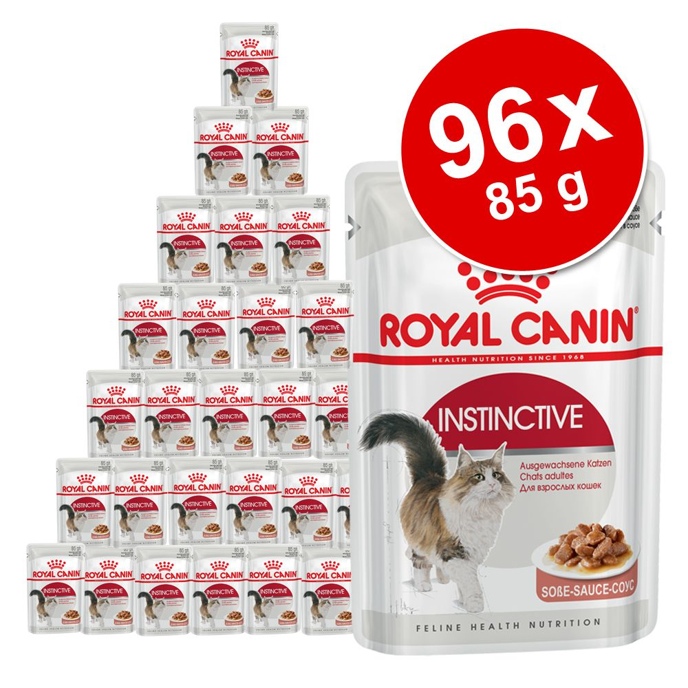 Ekonomipack: Royal Canin våtfoder 96 x 85 g - Breed British Shorthair i sås