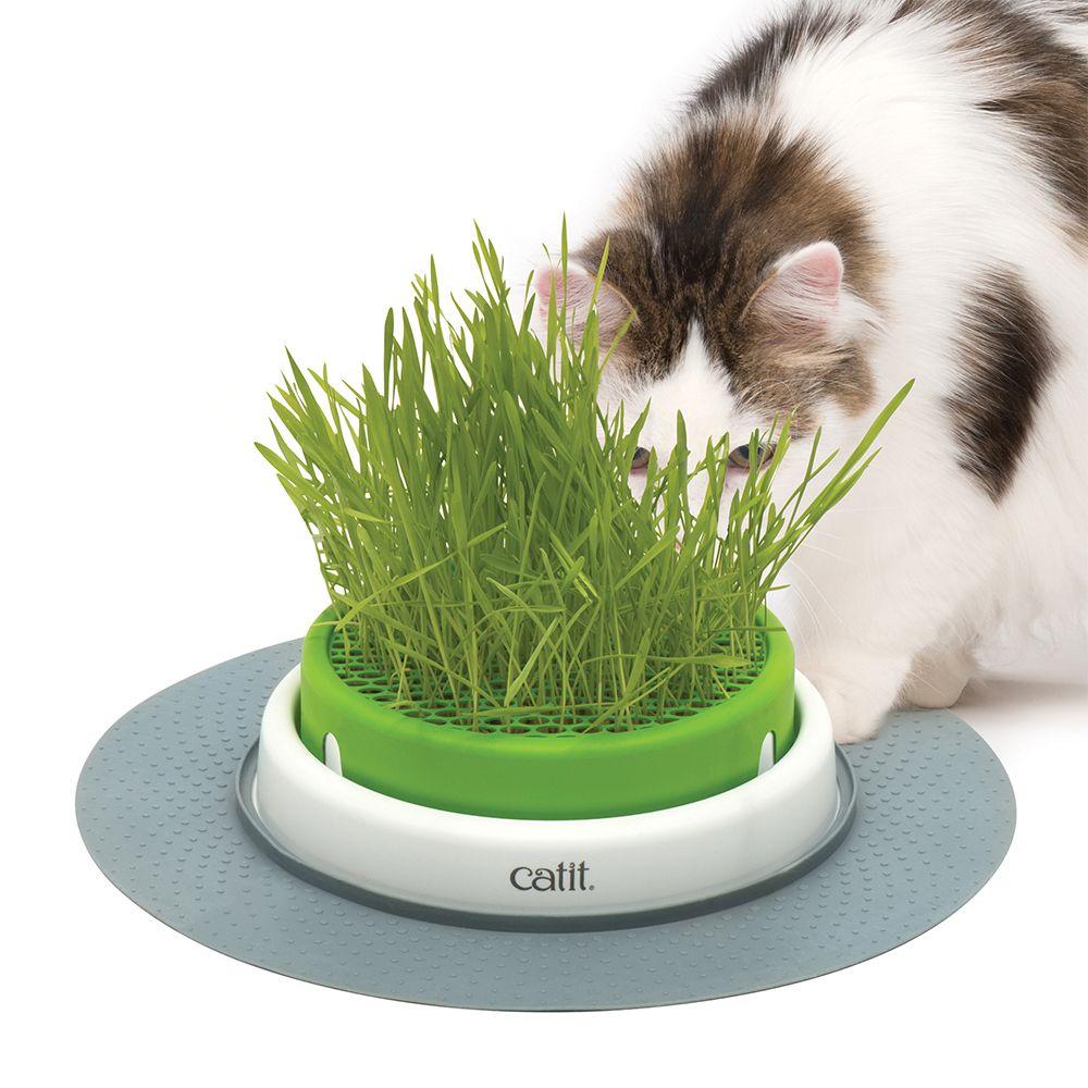 Catit Senses 2.0 miska z trawą - Trixie trawa dla kotów, 3 x 100 g