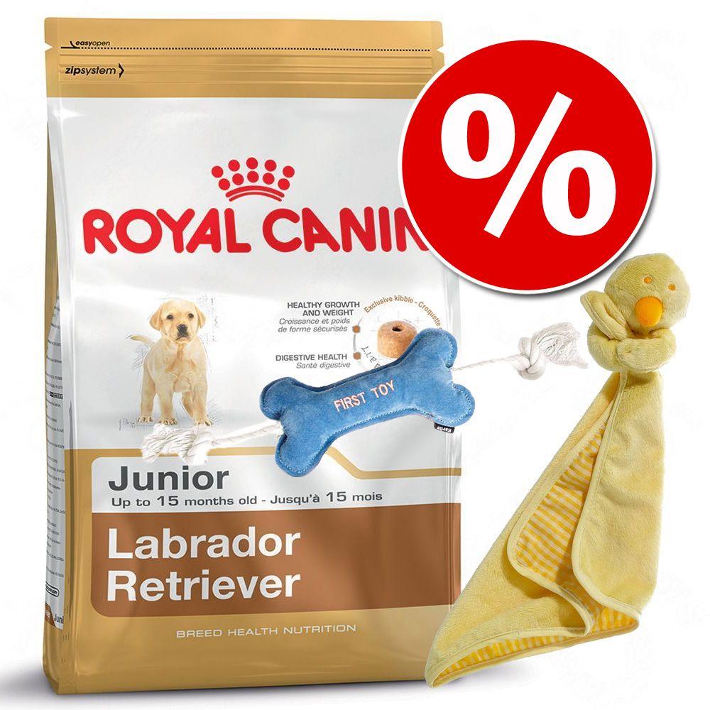 Foto Puppy Pack: crocchette Royal Canin Breed Junior + Copertina + Osso gioco - Bulldog Junior 12 kg Set