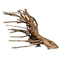 Talawa Wood Root - 1 piece, 40-60 cm