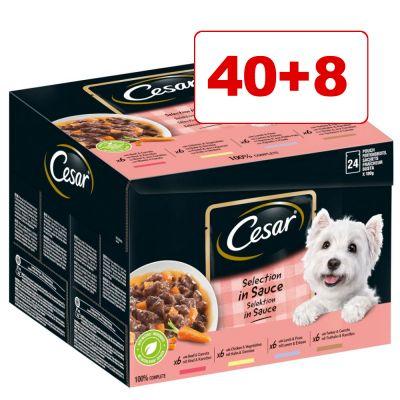 40 + 8 kaupan päälle! 48 x 100 g Cesar märkäruokaa - Selection in Jelly