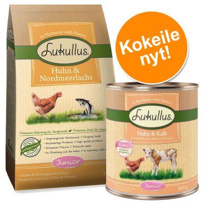 Lukullus-pentupaketti - 1,5 kg kuivaruokaa + 6 x 400 g kana & vasikka