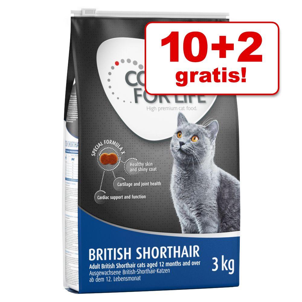 10 + 2 kg gratis! 12 kg Concept for Life Katzentrockenfutter - British Shorthair
