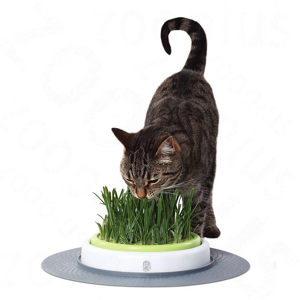catit-design-senses-gras-garden-macskafu-termeszto-keszlet-garden-szett-kb-o-24-cm
