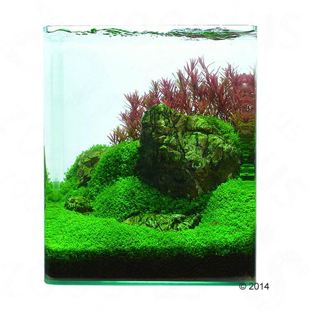 Zooplants Aquascaping-Pflanzenset von Volker Jo...
