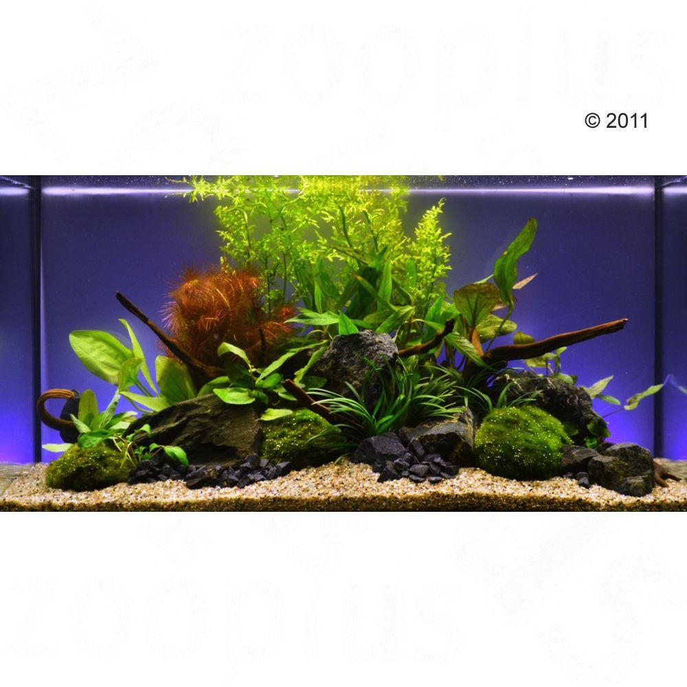 """Image of Set piante per acquario Zooplants """"Assortimento Misto"""" - 13 piante"""