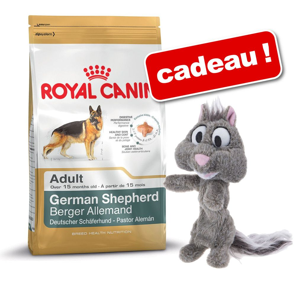 Chien Croquettes Royal Canin Breed