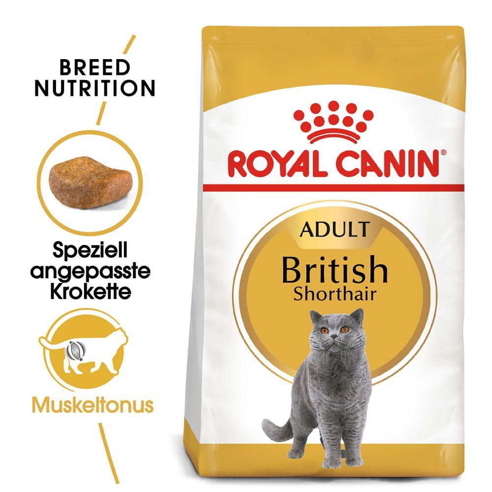 Royal Canin Breed British Shorthair Adult - 4 kg