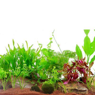 Zooplants Gezelschapsaquarium - 15 Planten