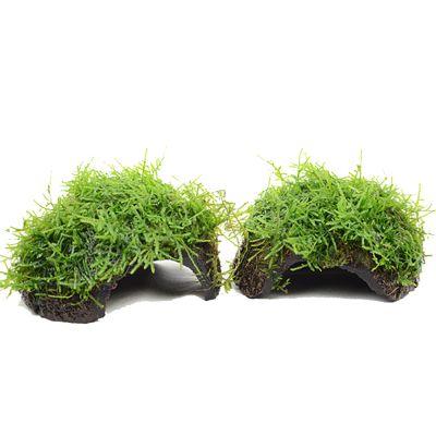 Aquariumplanten Zooplants Kokosnoot-Set - Dubbelpak: 4 x Javamos op Kokosnoot