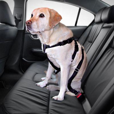Trixie Hundegurt