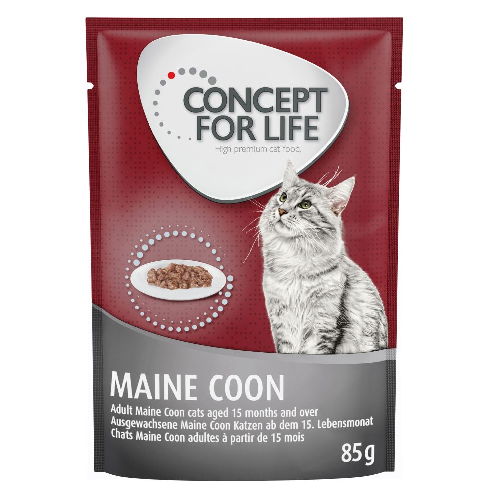 Concept for Life Maine Coon Adult Ragout - 48 x 85 g