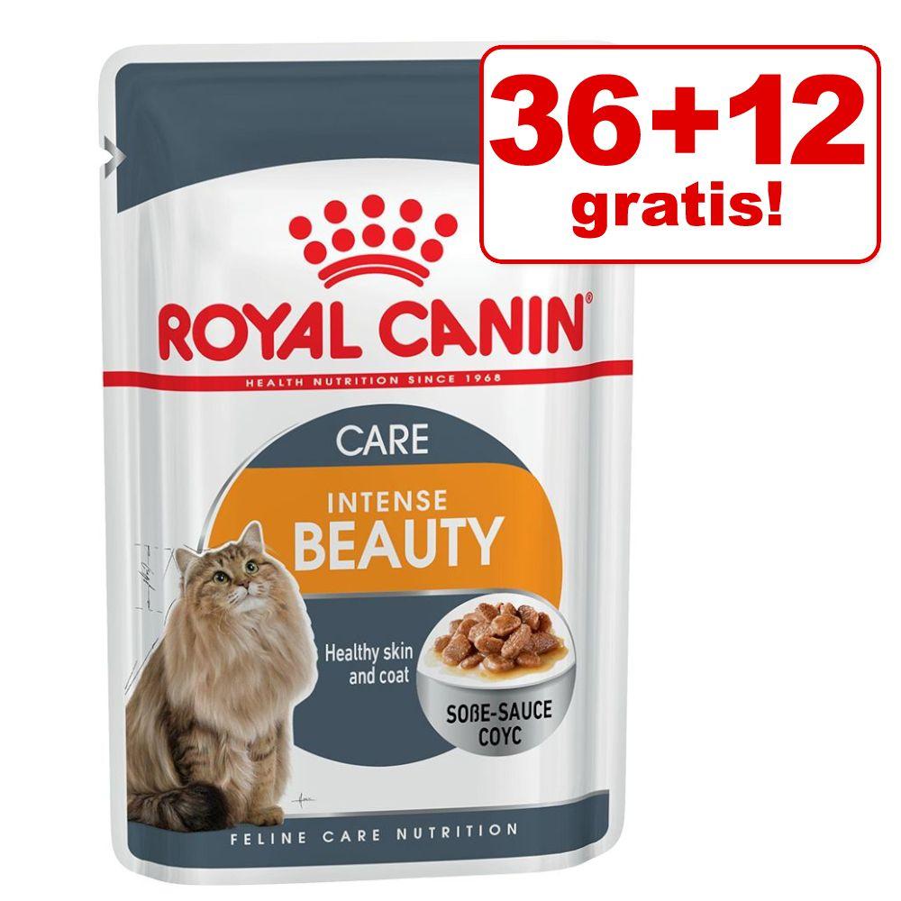36 + 12 på köpet! 48 x 85 Royal Canin våtfoder - Kitten i sås