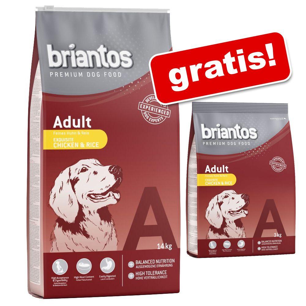 Foto 14 kg + 3 kg gratis! 17 kg Briantos - Adult Sensitive Agnello & Riso