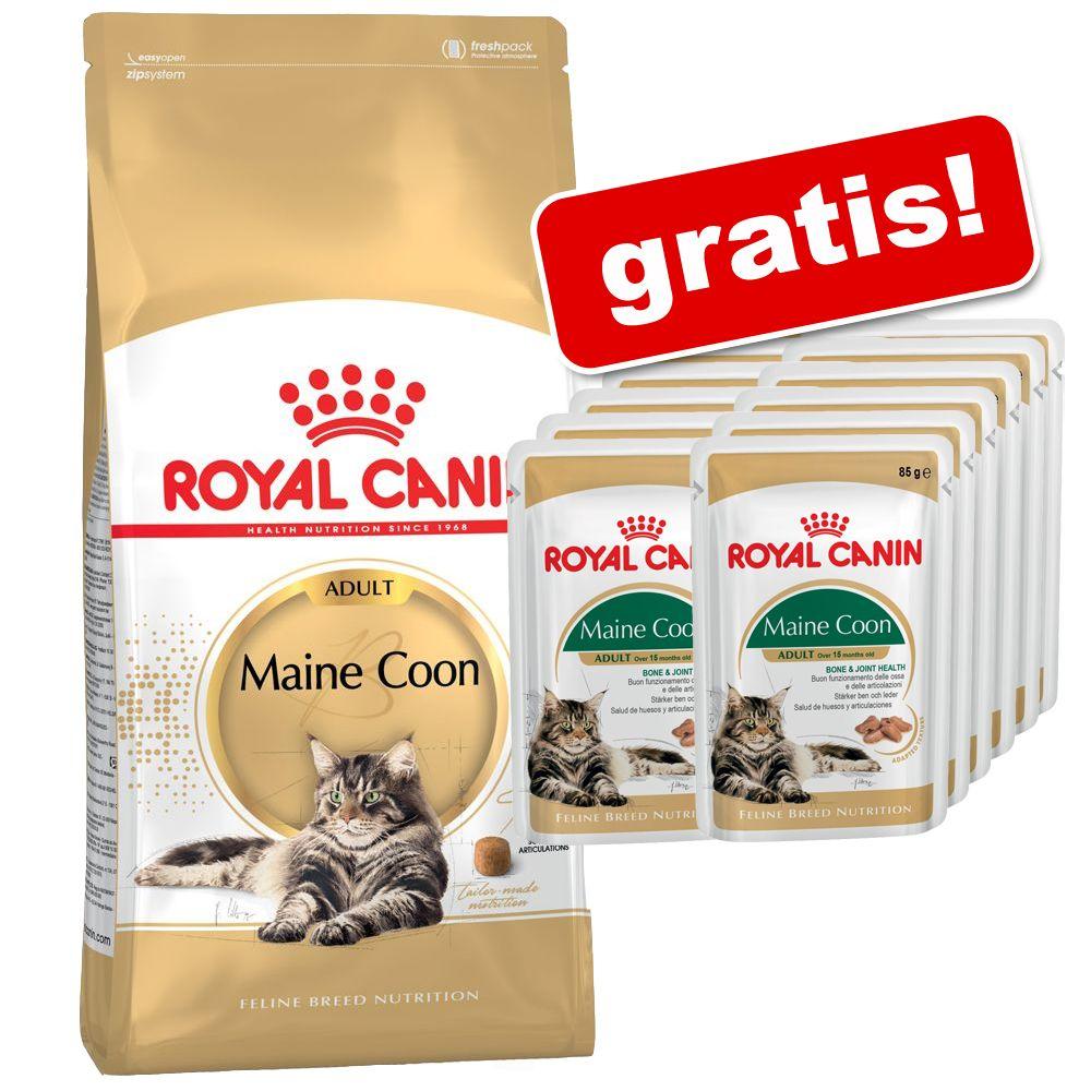 royal canin adult maine coon 10 kg preisvergleich katzenkroketten g nstig kaufen bei. Black Bedroom Furniture Sets. Home Design Ideas