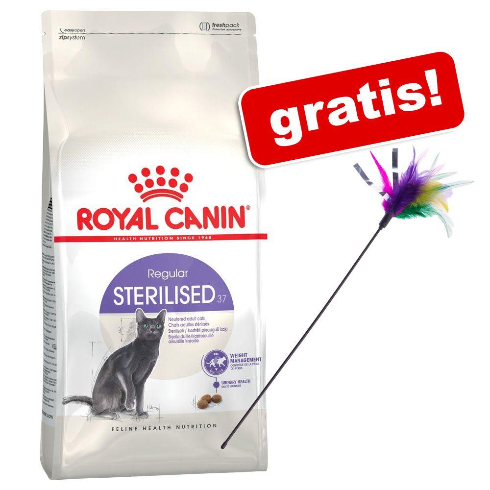 2/3,5 kg Royal Canin + Wędka dla kota z kolorowymi piórkami gratis! - British Shorthair Adult, 2 kg
