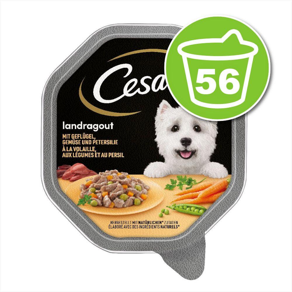 6x150g volaille, légumes en sauce Les recettes de Campagne Cesar - Nourriture pour chien